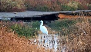 Azmak bölgesinde ilk kuş gözlemide ilk kuş gözlemi
