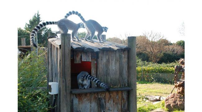 Doğal Yaşam Parkı hayvanlarına doğal gazlı ısıtma