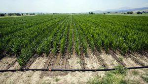 400 Bin Dekar Tarım Arazisi Sulanmaya Başladı