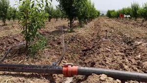 Ödemişli çiftçiler damlama sulamaya yöneliyor