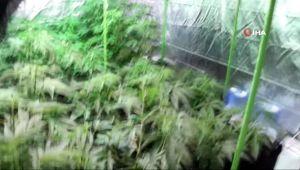 İzmir'de uyuşturucu operasyonu: 39 kök skunk bitkisi ele geçirildi