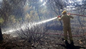 Urla ilçesindeki orman yangınıyla ilgili bir kişi gözaltına alındı