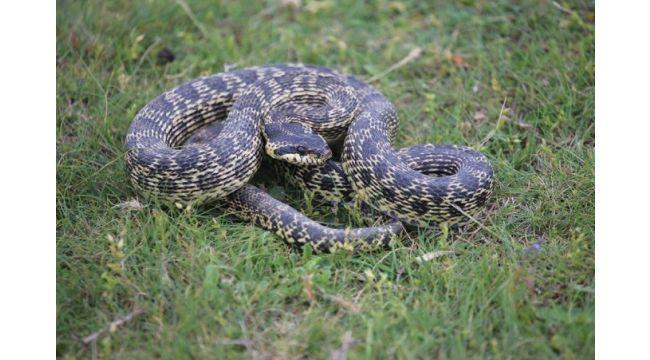 Yılanlar dostmudur? Düşmanmıdır?