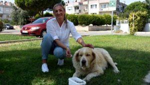 Elena, kanser olan sokak köpeği için Rusya'dan ilaç getirtti