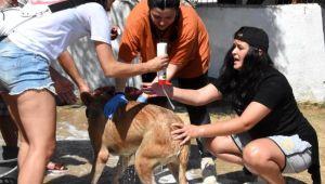 Hayvanseverler, barınaktaki köpekleri yıkadı