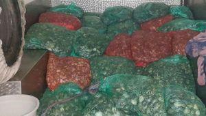 İzmir'de kaçak kum midyesi avcılarına 93 bin 800 lira para cezası