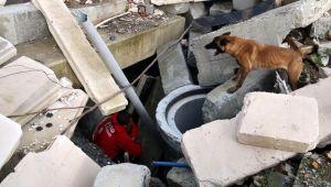 AFAD'ın sınavını geçen köpekler afetlerde görev alıyor