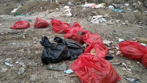 Ankara Barosundan, köpek ölümleriyle ilgili suç duyurusu