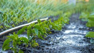 Sürdürülebilir tarım, pandemide kilit rol oynadı