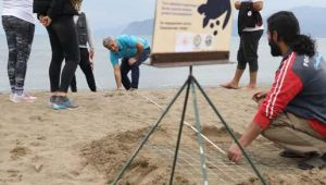 Akdeniz sahillerinde ilk caretta caretta yuvası İztuzu'nda oluştu