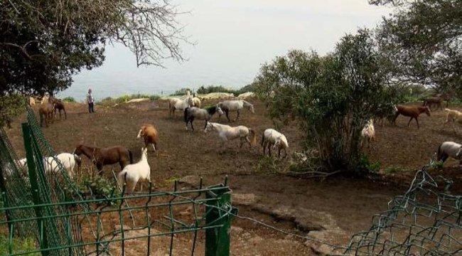 Kayıp atları alabilmek için başkanın çocuklarından yardım istemişler