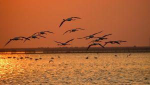 Kuş Cenneti gün batımında flamingolarla ayrı bir güzelliğe bürünüyor
