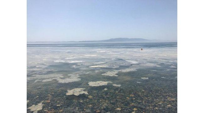Marmara Denizi Can Çekişiyor !